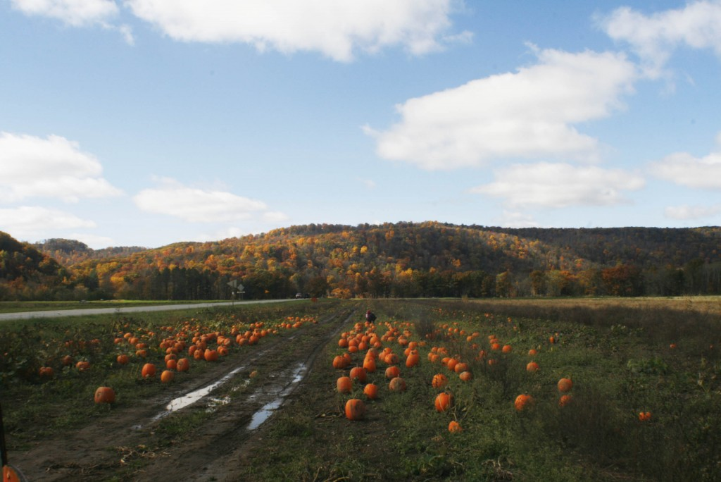 Pumpkin Field Event Inspiration
