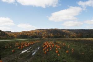 Pumpkin Field Event Inspiration